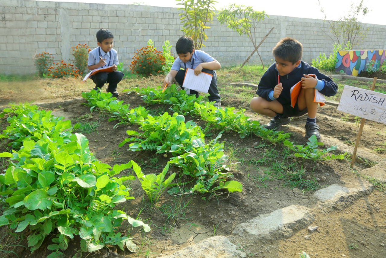 Farming || The Aarambh School